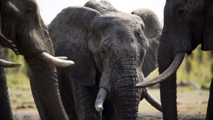 Elephants at Hwange National Park in Zimbabwe