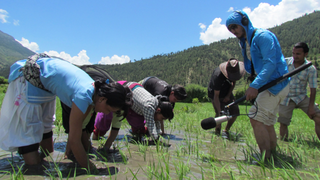 Recording women in rice field, Katha Mitho Sarangiko