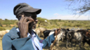 man with mobile phone and cow