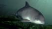 Harbour porpoise in the Irish sea
