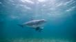 Two bottlenose dolphins swimming underwater