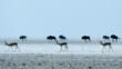 Springbok and wildebeest herds on an open plain