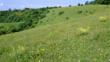 Chalk grassland
