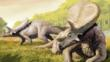A pair of Torosaurus dinosaurs, that are now thought to be a form of triceratops
