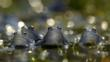 A group of male moor frogs
