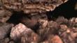 Galápagos petrel in a cave