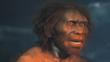 Model of a male Homo erectus, an early type of human
