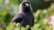 Jackdaw perched on ground