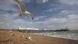 Seagull flying over a beach