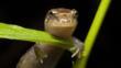 An ocoee salamander on a plant