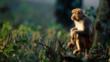 Assamese macaque sitting on tree vegetation