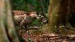 The prehistoric horse Propalaeotherium walking through a forest