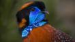 Close-up of a Temmincks tragopan looking round