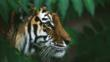 A Siberian tiger amongst green foliage