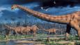 A herd of Diplodocus dinosaurs