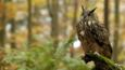 Owl perched on a branch in woodland