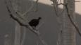 Megapode bird on a branch