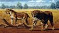 A pair of sabre-toothed cats walking on grassland