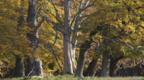 European oak woodland in autumn