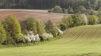 Hedgerow between two fields