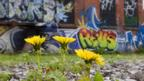 Urban habitats