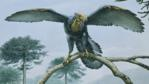 Archaeopteryx perched on branch of conifer tree, with wings spread open