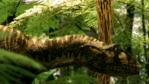 Profile of an Australovenator in a forest