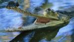 Male Indian gharial in water with mouth wide open