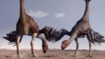 A pair of Gigantoraptors
