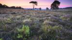 Heathland