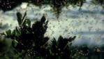 Mayflies emerging from lake