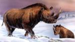 Woolly rhinoceros roaming the tundra of Palaeartica during the Pleistocene