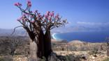 Desert rose on top of a cliff