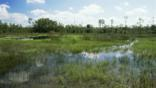 Flooded grassland of the Everglades