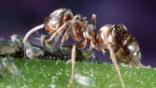 Die insekte is een van die mees suksesvolle vorme van lewende