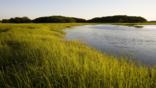 Early evening on a salt marsh