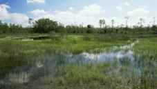 Flooded grassland