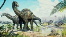 Sauropodomorph dinosaurs