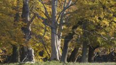 European oak woodland in autumn
