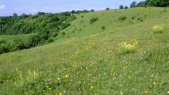 Mixed flowers on chalk downland in Hampshire