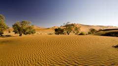 A desert sand dune landscape in Namibia