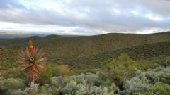 Mountain vegetation in South Africa