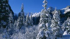 A winter snow scene in Canada