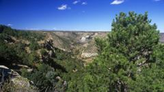 Pine and juniper forest in New Mexico