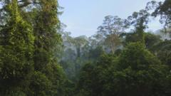 The rainforest of Borneo