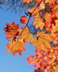 Wild autumn