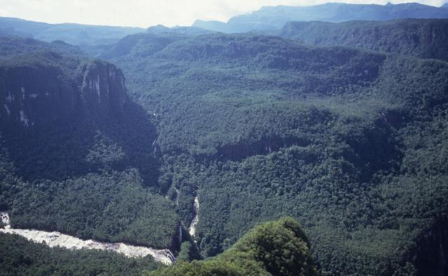 Amazonian rainforest at Serra Parima, Orinoco river basin