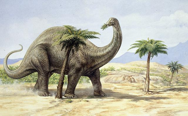 Apatosaurus (Brontosaurus) browsing from tree tops in a sandy landscape