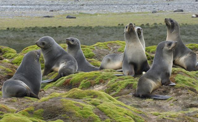 Group Of Seals Is Called 20