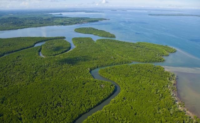 Rainforest and mangroves in a estuary in Malaysia